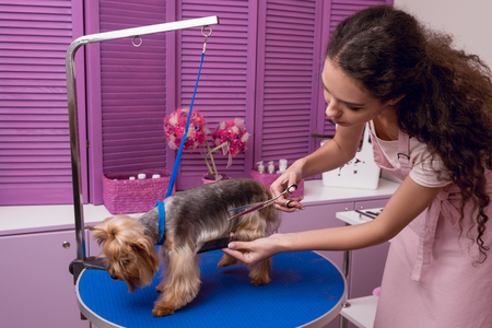 professional groomer holding comb and scissors while grooming dog in pet salon
