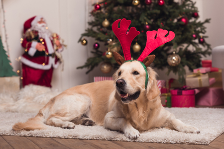 golden retriever dog in antlers