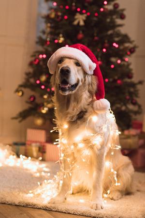 hond in kerstmuts