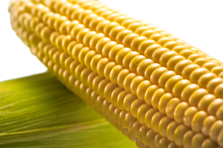 raw corn cobs Stock Photo