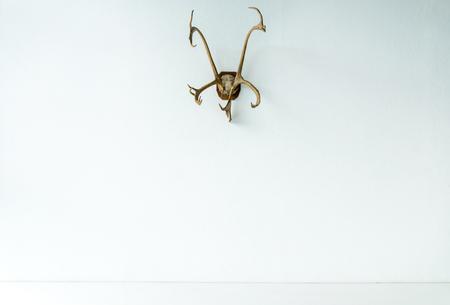 Deer horns on wall Stock fotó