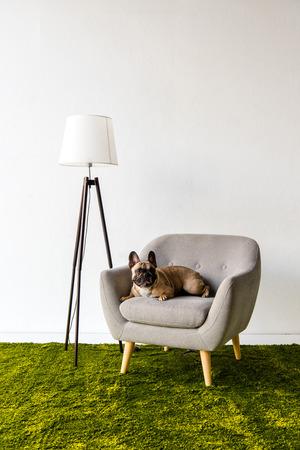 Dog lying on armchair in room Stok Fotoğraf - 89185887