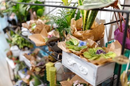 fresh plants in flower shop Zdjęcie Seryjne