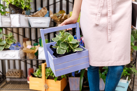 florist holding basket with plant