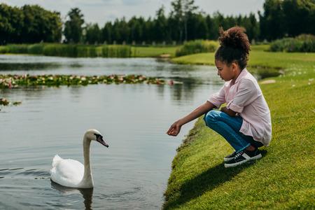 kind voederen zwaan in park