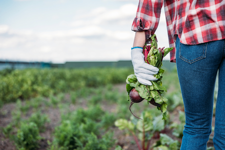 cropped shot of farmer holding fresh beets while walking on field  Stockfoto