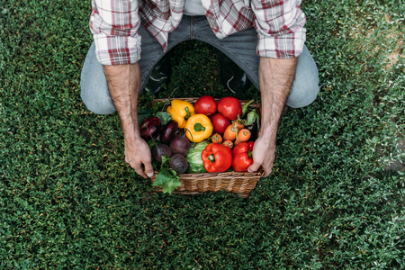 cropped shot of farmer holding basket with fresh organic vegetables