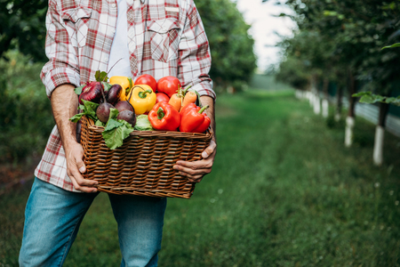 cropped shot of farmer in checkered shirt holding basket with fresh organic vegetables