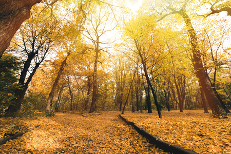 road in beautiful autumn park covered with golden leaves Stock Photo