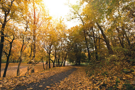 pathway in autumn park covered with fallen leaves