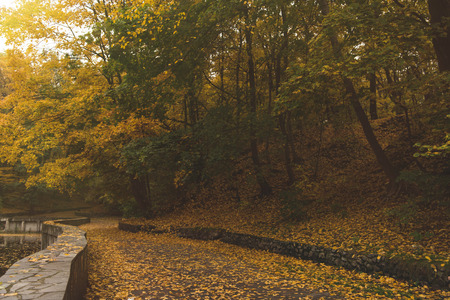 road in autumn park covered with golden leaves