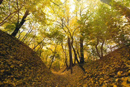 beautiful autumn park covered with yellow fallen leaves