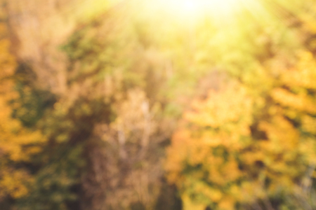 가을 숲의 샷을 흐리게