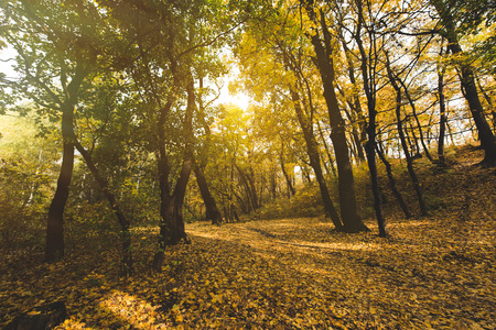beautiful autumn forest with fallen leaves on ground