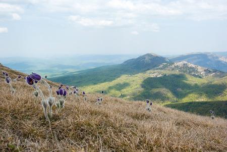 Lentebloemen groeien in prachtige bergen