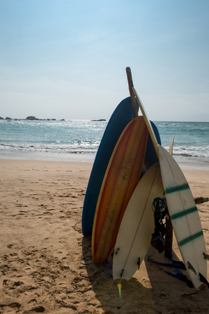surfboards standing in row on beautiful sandy beach