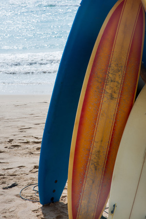 close-up view of surfboards standing in row on sandy beach Stock Photo