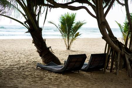 해변에서 열 대 나무 아래 럭셔리 sunbeds 스톡 콘텐츠 - 91443904