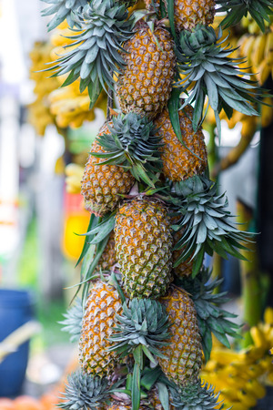 delicious fresh pineapples hanging on market