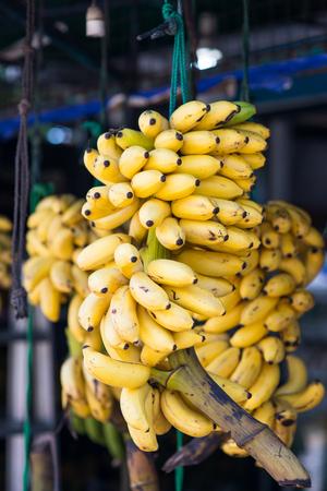 branch of tasty bananas selling on market