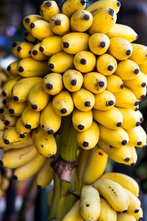 branch of fresh tasty bananas selling on market