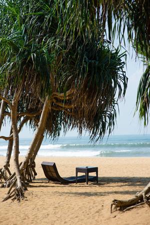 아름 다운 모래 해변에 열 대 나무 아래 고급 sunbed