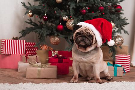 クリスマスパグ
