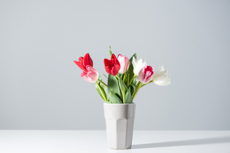 blooming white, pink and red tulips in vase on grey