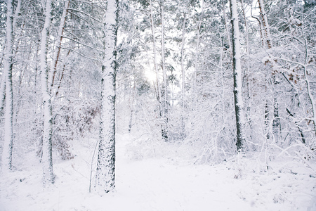 trees covered with snow in forest