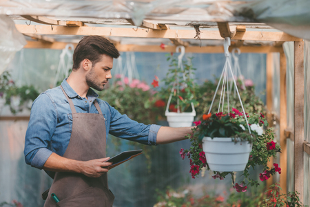 gardener in apron using tablet while checking plants in greenhouse