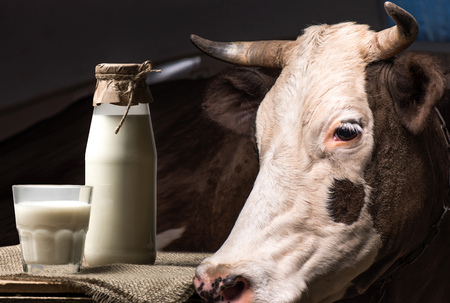 fresh milk in glass and jar and brown cow standing behind