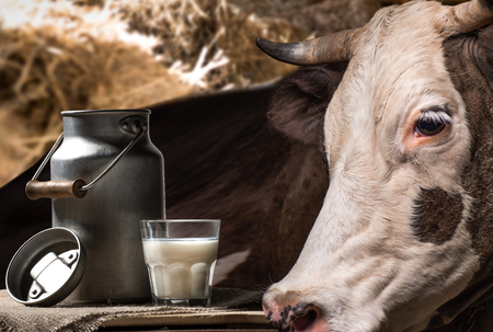 fresh milk in glass and can and brown cow standing behind Zdjęcie Seryjne