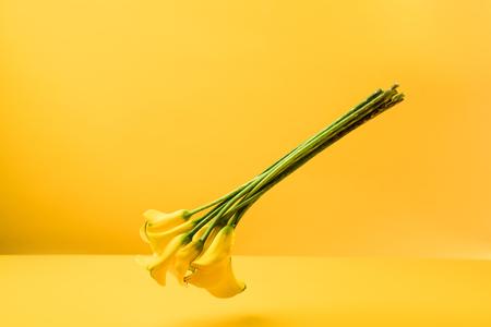 黄色に隔離された美しい柔らかい黄色の春の花 写真素材