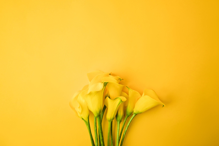 close-up view of beautiful yellow calla lily flowers isolated on yellow