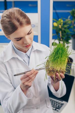 biologist working with grass in laboratory Stok Fotoğraf
