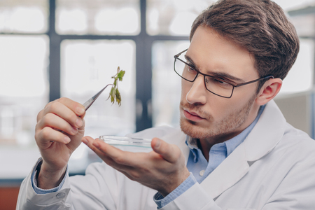 biologist looking at plant in tweezers Stockfoto