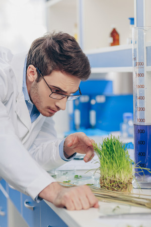 biologist working with grass in laboratory Stock Photo