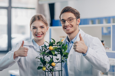 biologists with lemon plant Stock fotó