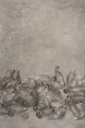 top view of quail feathers on concrete surface with copy space
