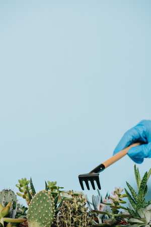 close-up view of human hand in glove holding rake and green succulents isolated on grey 版權商用圖片