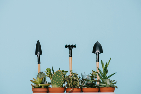 green succulents in pots and rake with shovels isolated on grey Reklamní fotografie - 96801728