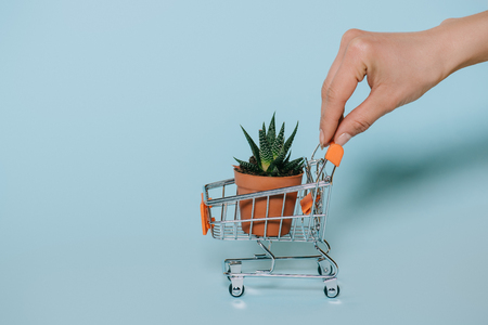 cropped shot of human hand holding small shopping cart with green aloe plant on grey Foto de archivo