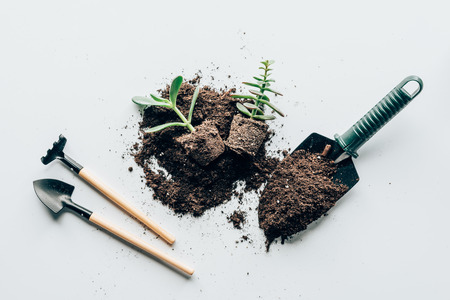 top view of green plants in ground, gardening tools and soil