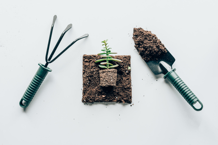 top view of beautiful green plant in ground and gardening tools