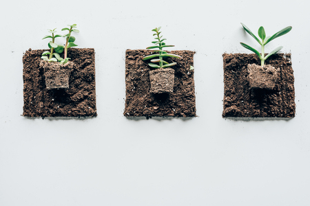 top view of beautiful green plants in ground