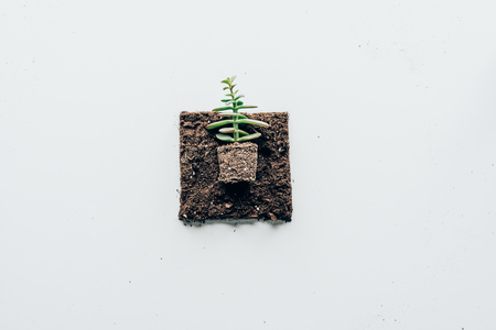 top view of beautiful green plant in soil Stok Fotoğraf