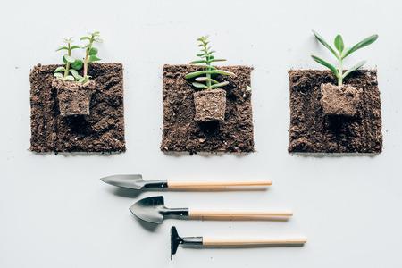 top view of beautiful green plants in soil and gardening tools 版權商用圖片