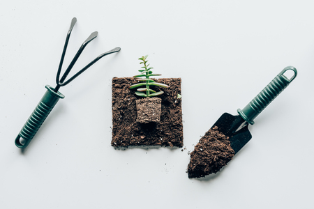 top view of beautiful green plant in soil and gardening tools 版權商用圖片