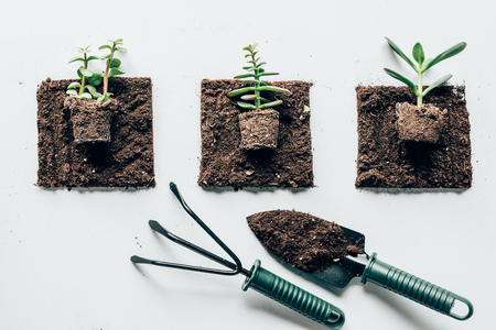 top view of beautiful green plants in ground and gardening tools Imagens