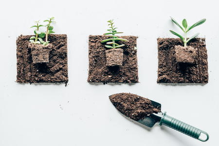 top view of beautiful green plants in ground and small shovel for gardening